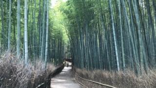 京都嵐山の現状リポートします